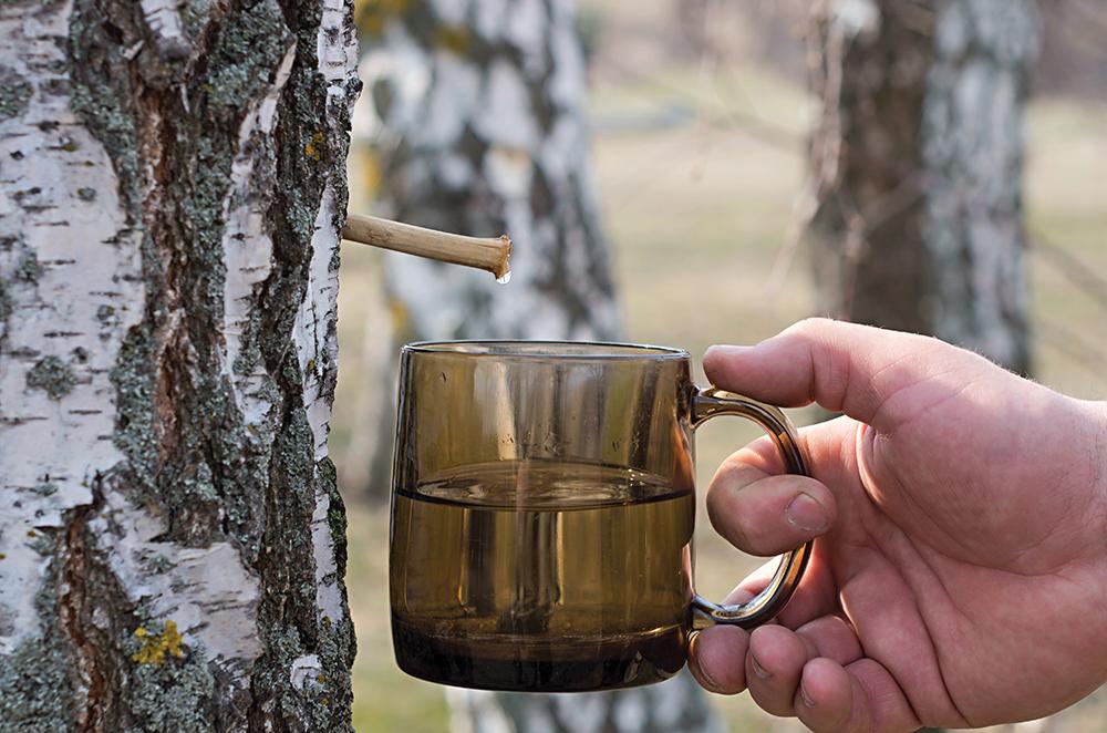 La linfa di betulla e le sue proprietà – Corso riconosciuto AIGAE